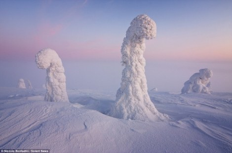 Ice Worms, Finnish Lapland, Arctic.