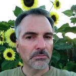Nicolay_Sunflowers_pic